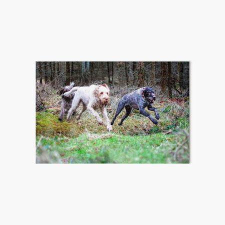 Galloping Through Woods Leaping Over Ditches Art Board Print