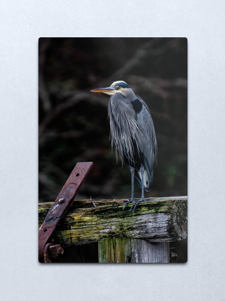 Alternate view of Blue Heron in Miners Bay Metal Print