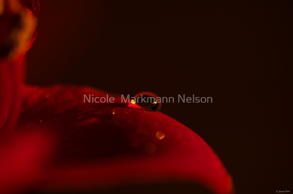 The Droplet by Nicole  Markmann Nelson