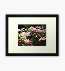 Tropical Plants And Colors - Plantas Y Colores Tropicales Framed Print