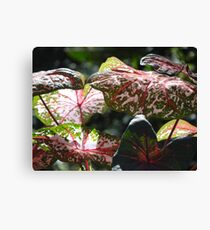 Tropical Plants And Colors - Plantas Y Colores Tropicales Canvas Print