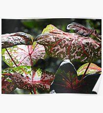 Tropical Plants And Colors - Plantas Y Colores Tropicales Poster