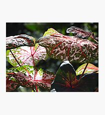 Tropical Plants And Colors - Plantas Y Colores Tropicales Photographic Print