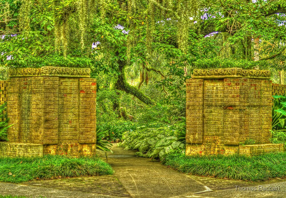 THE ENTRANCE by TJ Baccari Photography