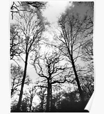 Stretching Trees Poster