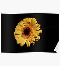 Yellow Flower - lighten the dark Poster