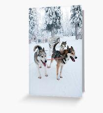 Huskies away Greeting Card