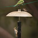 Bird Stack by Richard G Witham