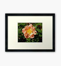 Peach Rain Framed Print