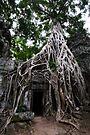 Entangled, Cambodia by Michael Treloar