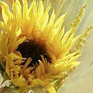 ~ Sunshine ~ by Brenda Boisvert