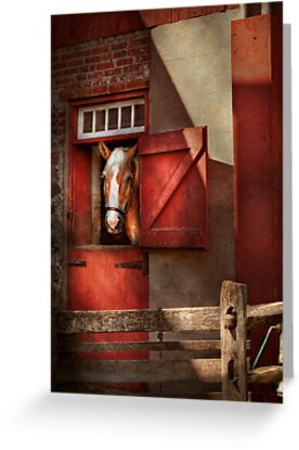 Animal - Horse - Calvins house  by Michael Savad