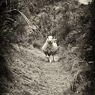 The New Zealand Sheep by Dilshara Hill