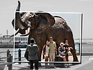 Elephant in the city by awefaul