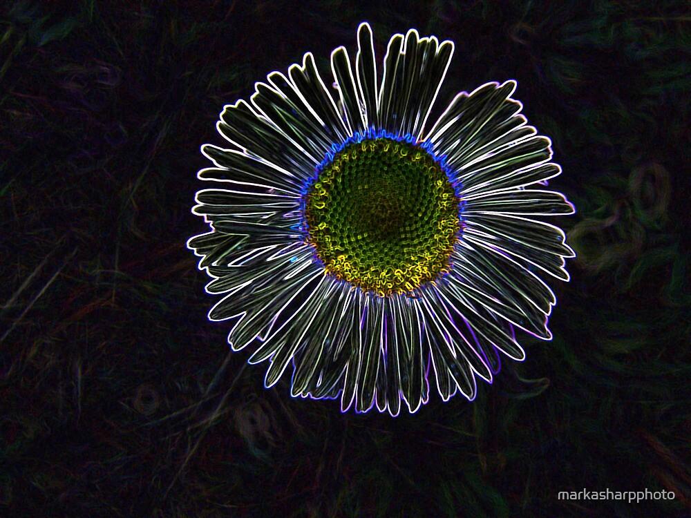 Untitled by markasharpphoto