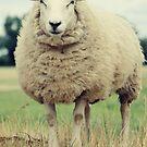 Sheep by Falko Follert