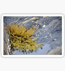Seaweed Amongst the Rocks Sticker