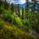 Many Looks Of Nature by Charles & Patricia   Harkins ~ Picture Oregon