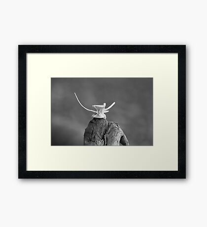 fishbone Framed Print