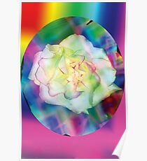 Rainbow rose and red accents Poster