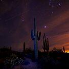 On a Starlit Night  by Saija  Lehtonen