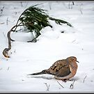 Mourning Dove in Snow by Mikell Herrick