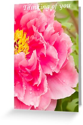 Peony close up by Penny Fawver