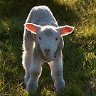 Untitled- Lamb Ears by claire-virgona