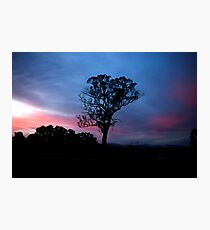 Untitled- Tree SilSet Photographic Print
