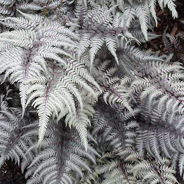 Silver fern by paulm100