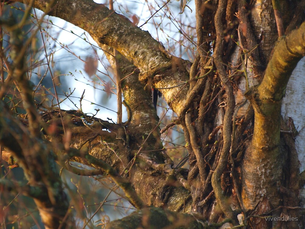 Ivy Roots in the Tree VRS2 by vivendulies