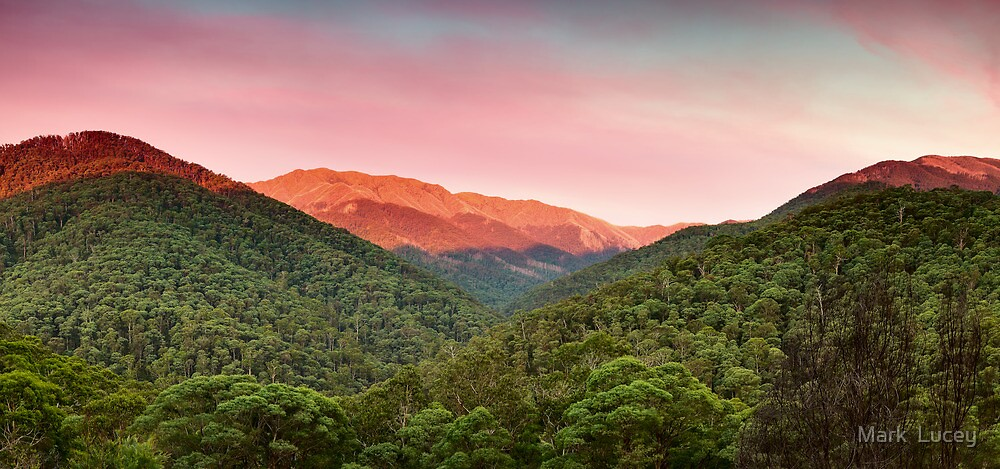 A Natural Highlight by Mark  Lucey