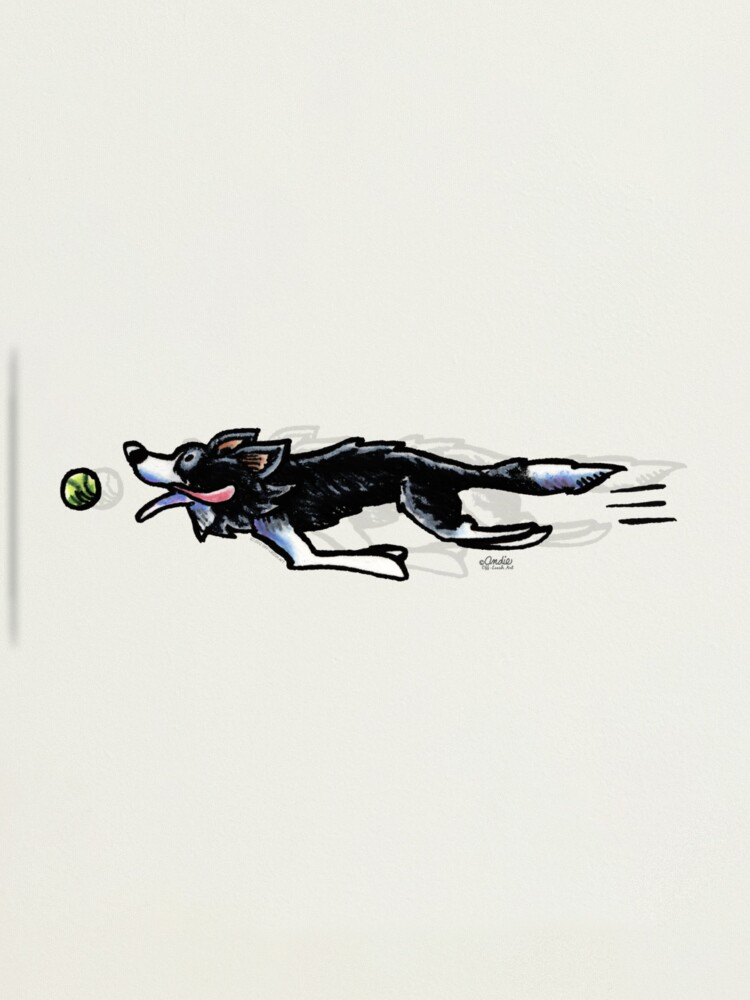 Alternate view of Border Collie in Action Photographic Print
