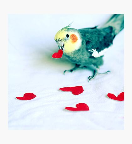 Will You Be My Valentine? Photographic Print