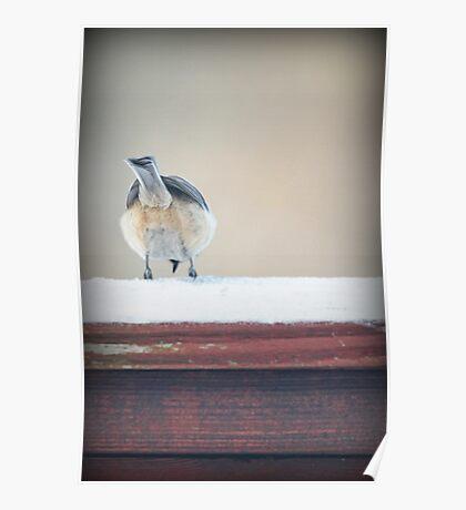 Birdie Bum ~ Poster