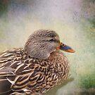 Mallard Duck by Carol Bleasdale