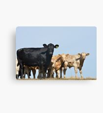 Group of Cows on the skyline Canvas Print