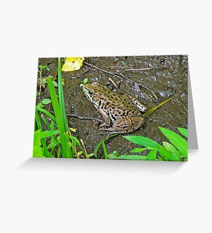American Bullfrog - Rana catesbeiana Greeting Card