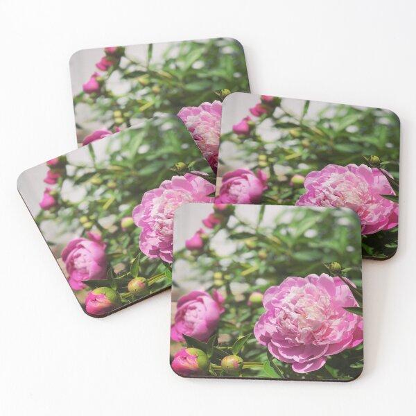 front door flowers Coasters (Set of 4)