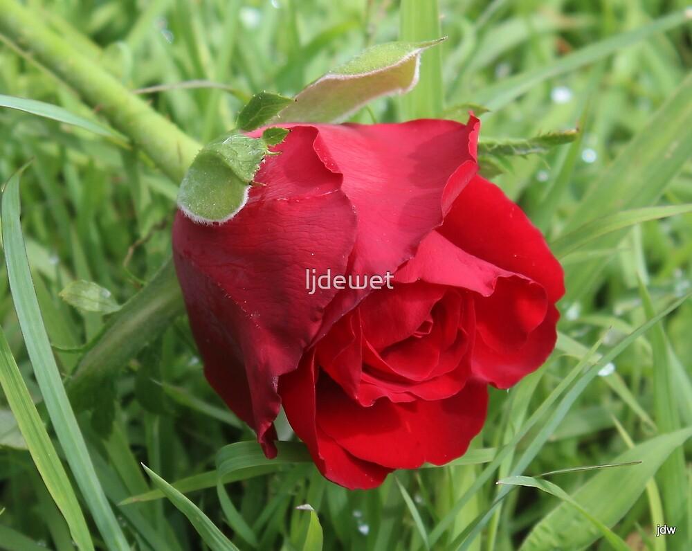 love red by Jeannine de Wet
