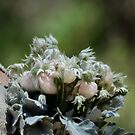 Flannel Flowers by Kate Howarth