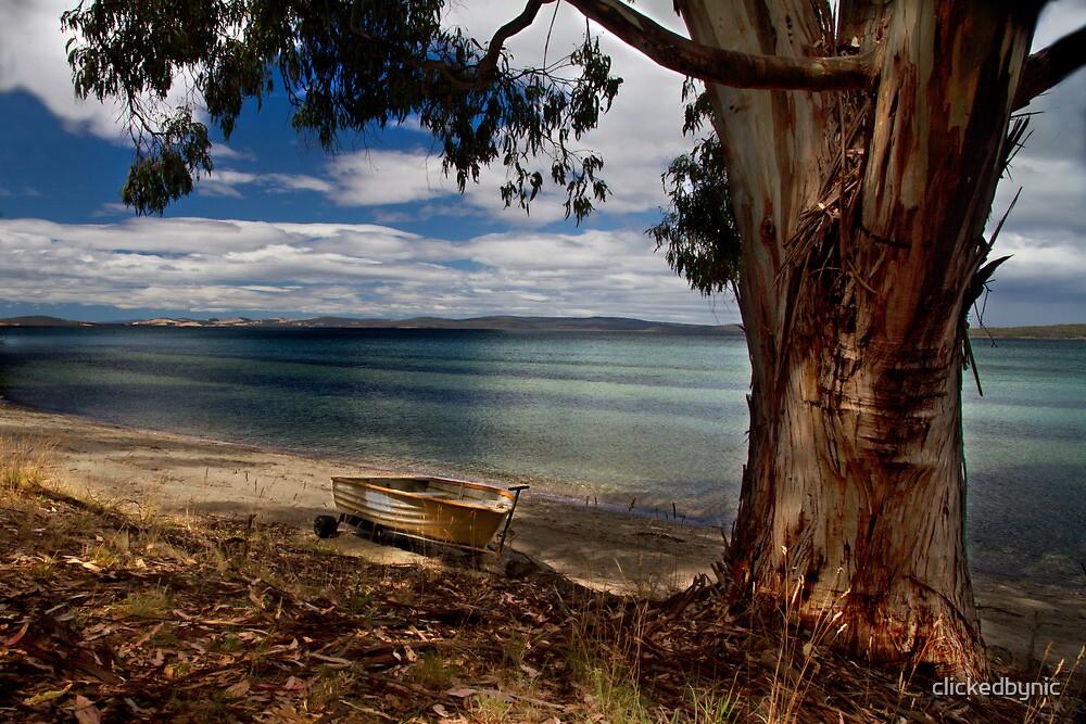 Beachside gum - Middleton, Tasmania by clickedbynic