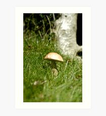 In the Undergrowth Art Print