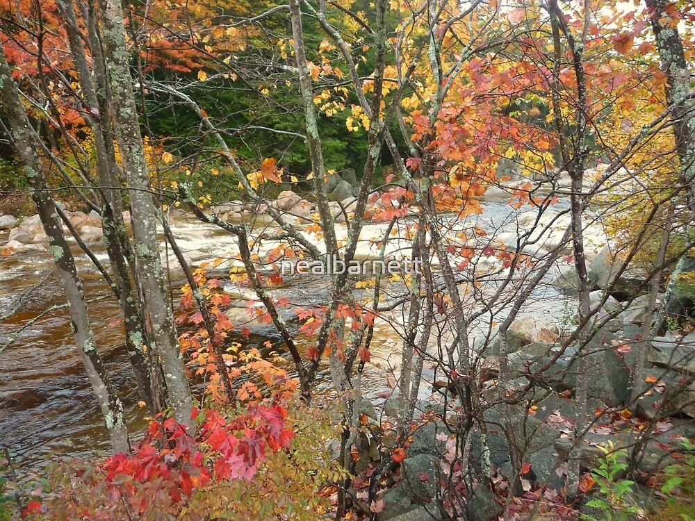 Swift River through a maple screen by nealbarnett
