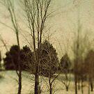 December Trees by sandra arduini