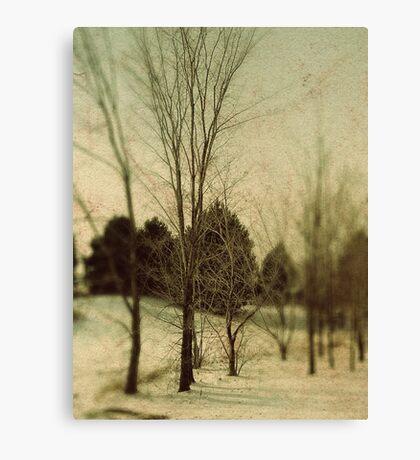 December Trees Canvas Print