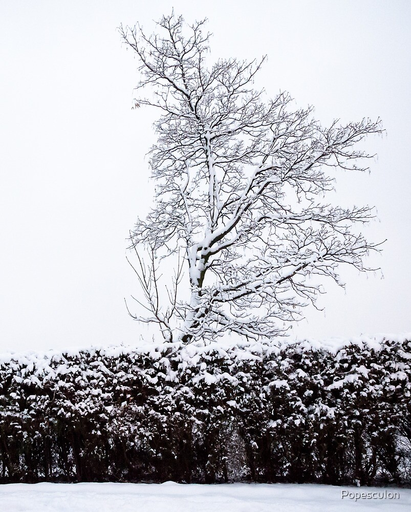 Tree in winter by PopescuIon