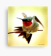 HUMMINGBIRD WALKING WIRE Canvas Print