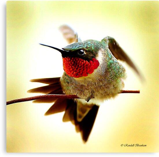 HUMMINGBIRD WALKING WIRE by Randy Branham