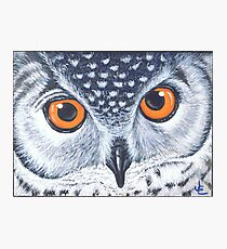Owl- I'm watching you Photographic Print